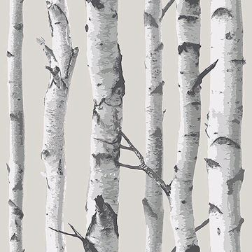 Picture of Birch Tree Peel And Stick Wallpaper