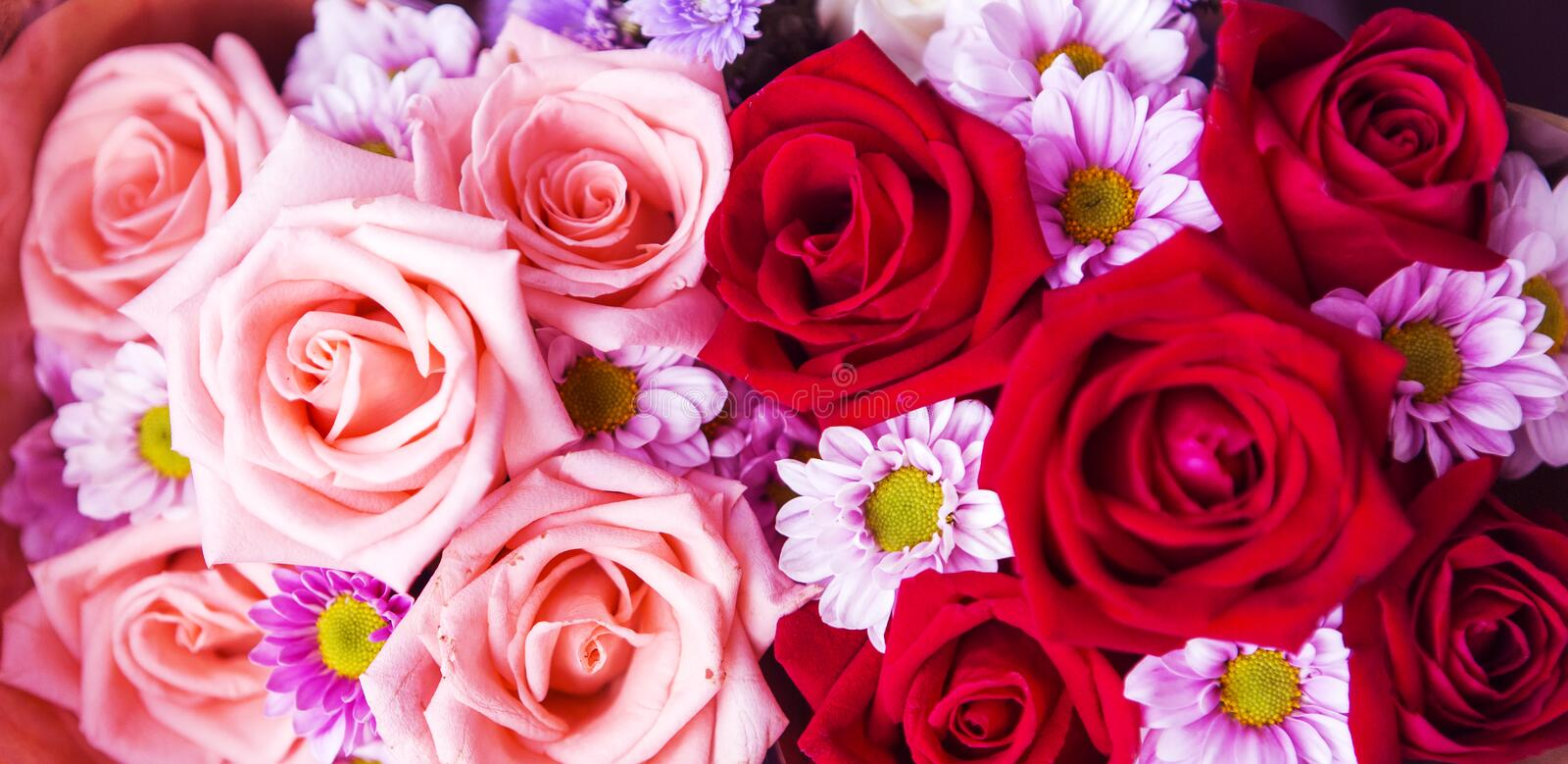 Beautiful rose wall made of colorful paper, valentines day background royalty free stock images