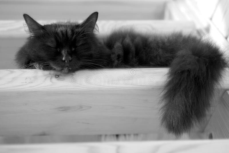 Black domestic cat sleeping on steps of wooden stairs inside house. Fluffy black domestic cat sleeping on the steps of wooden stairs inside the country house royalty free stock photos