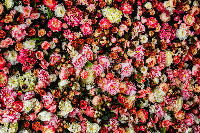 Closeup image of beautiful flowers wall background royalty free stock image