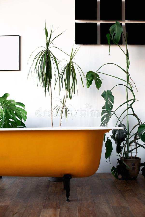 Design of loft Interior of bathroom or room. White walls with free copyspace. Trend green - palm leaves on background. Modern design yellow bath royalty free stock photography