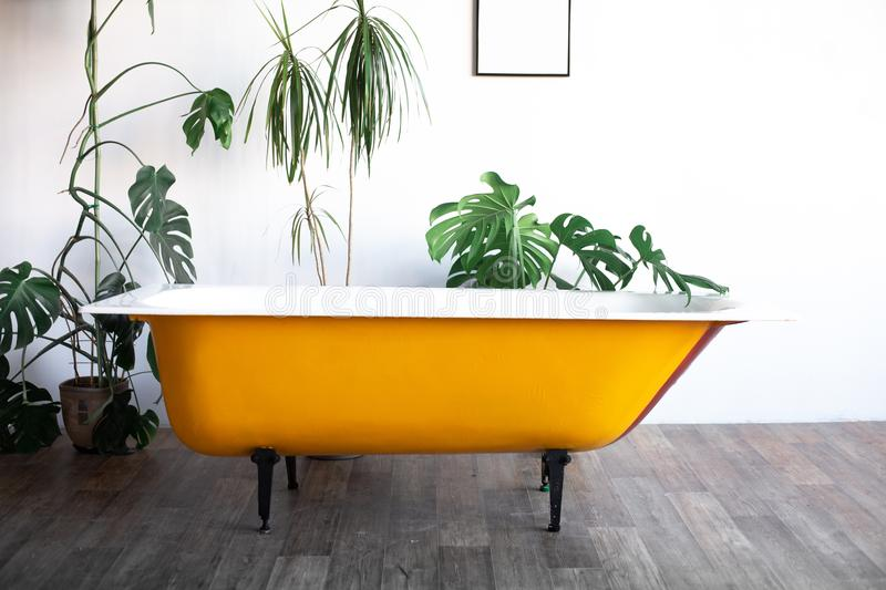 Design of loft Interior of bathroom or room. White walls with free copyspace. Trend green - palm leaves on background. Modern design yellow bath stock photos