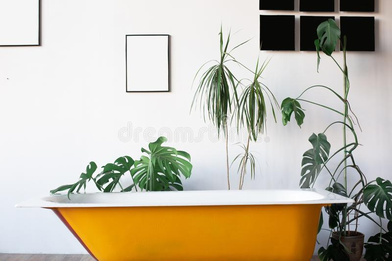 Design of loft Interior of bathroom or room. White walls with free copyspace. Trend green - palm leaves on background. Modern design yellow bath stock photography