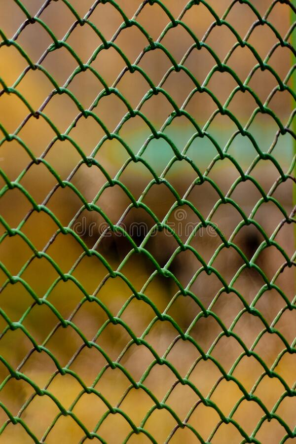 Fence of metal rods, green mesh netting rabitz. Vertical background, green fence made of metal rods mesh netting rabitz stock photo