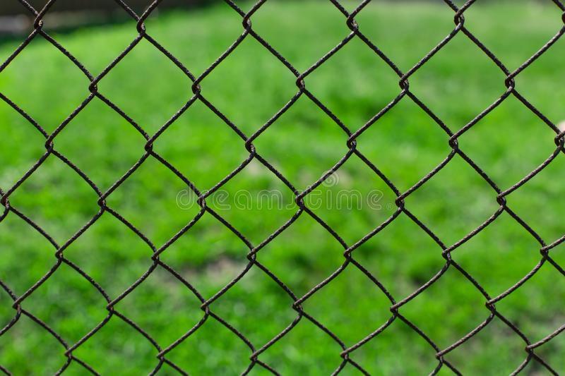 Green lawn on a metal mesh netting.  royalty free stock photos