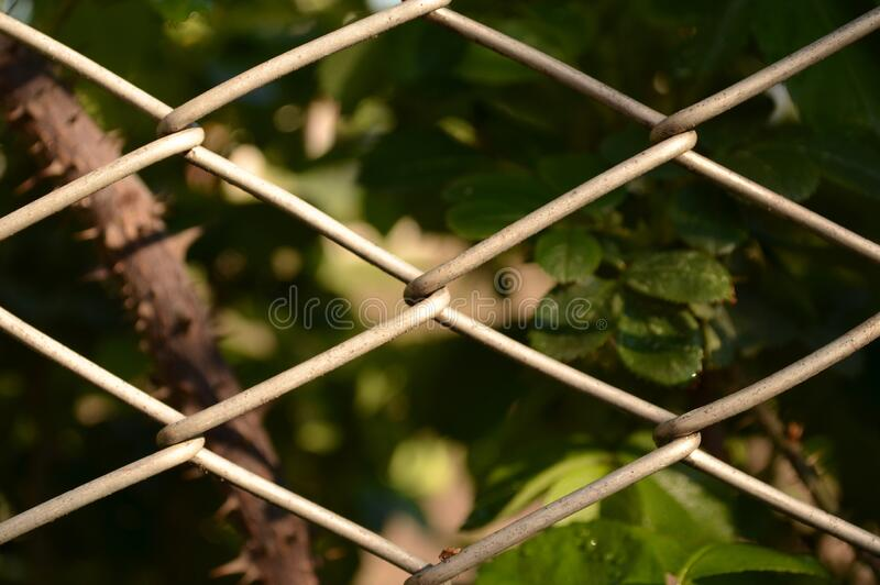 A fragment of a fence made of mesh netting. Mesh netting woven from a metal wire for the arrangement of fences and fences. The green zone is separated and vector illustration