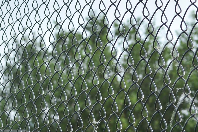 Metal mesh netting close-up. Rabitz. Close up. background. Abstraction. Mesh netting in perspective on a green background as a. Background. Rabitz Grid Close up stock photo