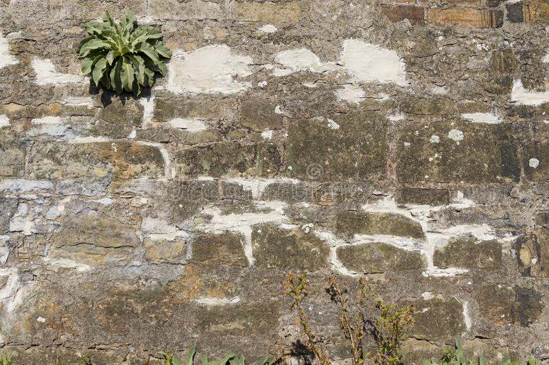 Old wall of natural stone with efflorescence and growth, grouted and plastered and repaired with brick. In harsh sunlight royalty free stock image