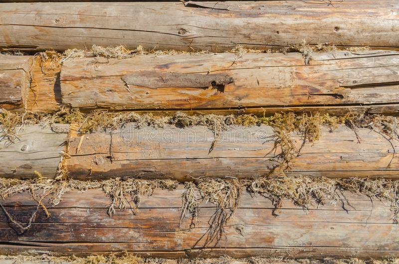 The old walls of the barn in the gap scored moss, insulation. The walls of the barn, in the gap clogged moss, natural, environmentally friendly insulation royalty free stock image