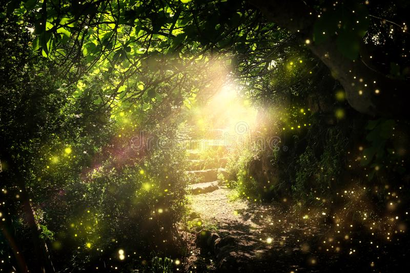 Road and stone stairs in magical and mysterious dark forest with mystical sun light and firefly. Fairy tale concept stock illustration