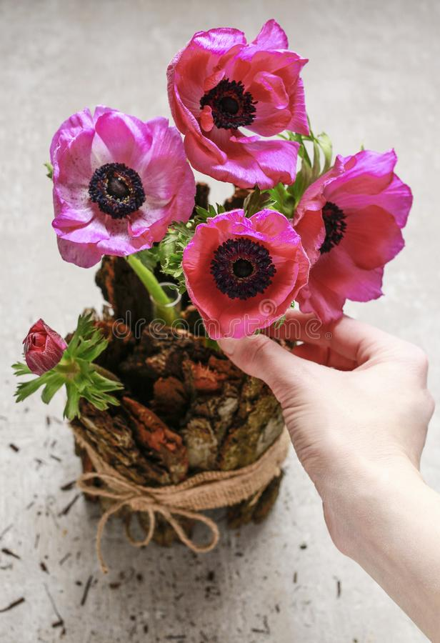 Woman making spring table decoration with bark and anemone flowers. Florist at work: woman making spring table decoration with bark and anemone flowers stock photos